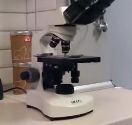 Sprzęt do badań laboratoryjnych – mikroskop